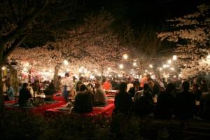 Night Hanami at Maruyama Park, Kyoto